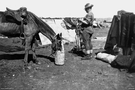 In the NSW Imperial Bushmen camp, South Africa, 1900.